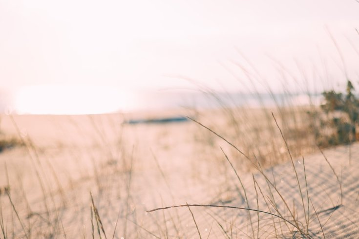 windward beach bacteria
