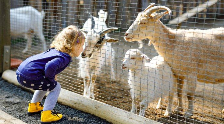 Petting Zoo illness