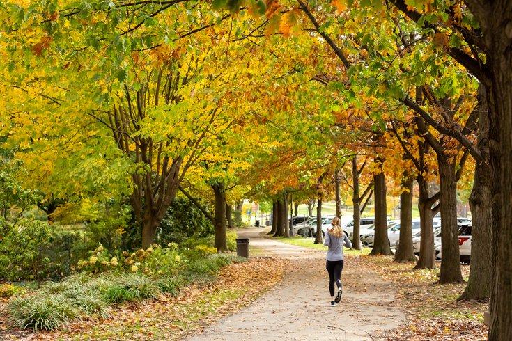 Carroll - Running in autumn
