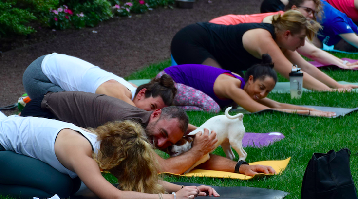 yoga with puppies