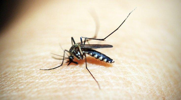mosquito triple e virus delaware