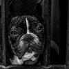 08092018_sad_dog_unsplash