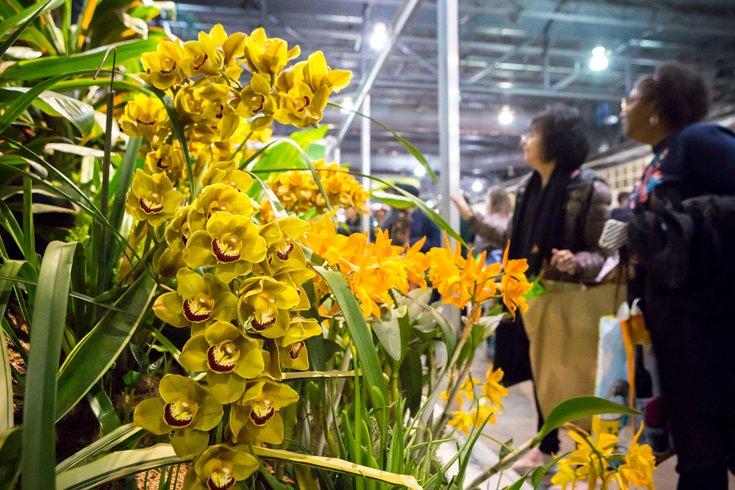 Flower Show 2020.Tickets Now On Sale For The 2020 Phs Philadelphia Flower