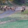 Elk Cam Pennsylvania