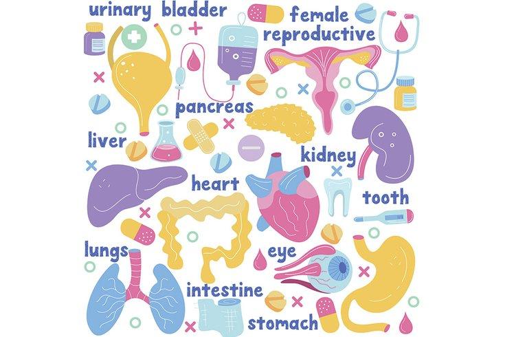 Human Organs SPS 08252019