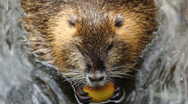 Beaver Ida Pennsylvania