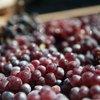 091617_VanAukenT_winemaking_0387.jpg
