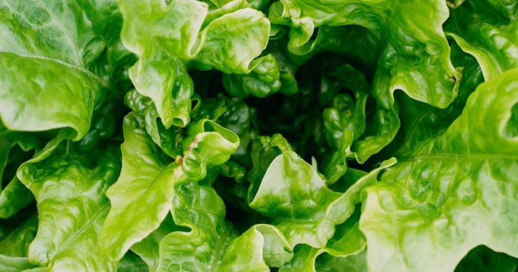 With E. coli outbreak declared over, it's again safe to eat romaine lettuce from Salinas Valley, CDC says