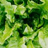 Romaine lettuce E. coli outbreak over Pennsylvania