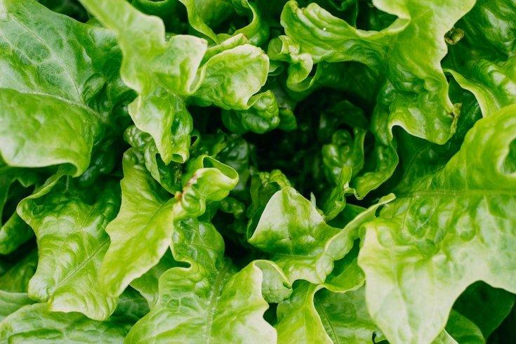 Romaine lettuce E. coli outbreak over Pennsylvania