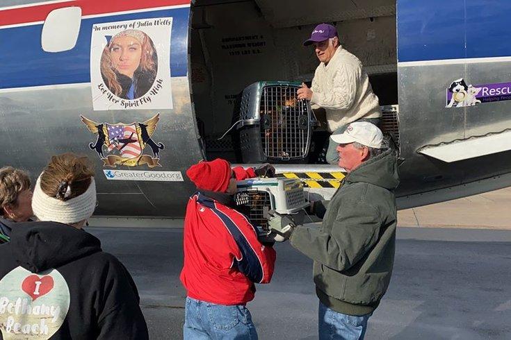 Brandywine SPCA Puerto Rico rescue dogs