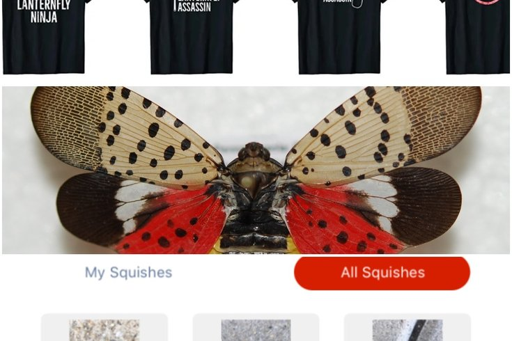 1002_spotted lanternfly