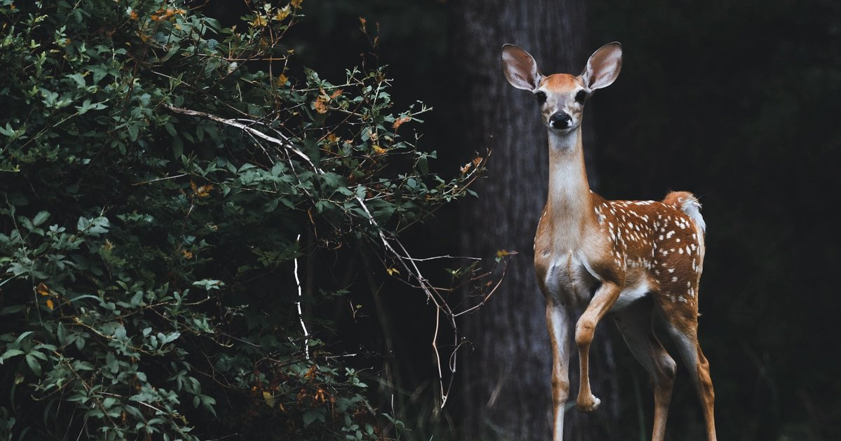 Deer enters New Jersey house through front door, makes itself right at home - EpicNews