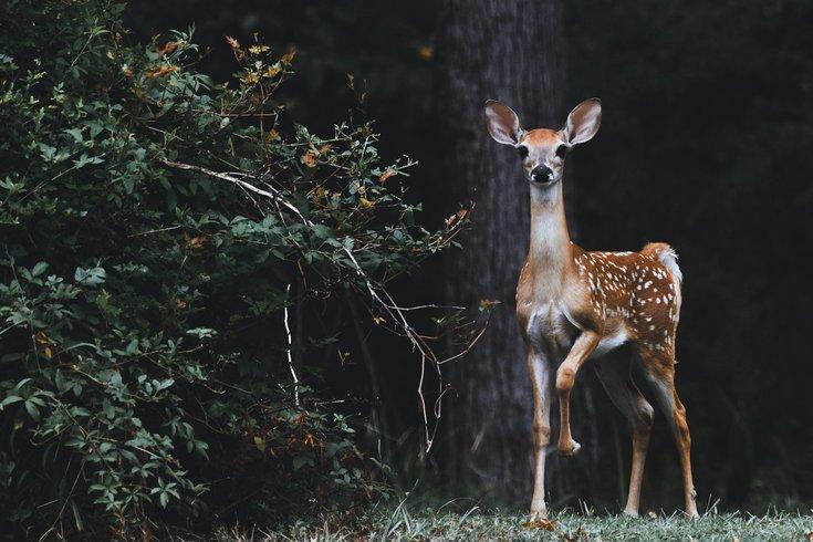 1010_deer