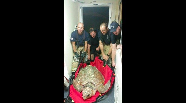 101916_turtle_NJ