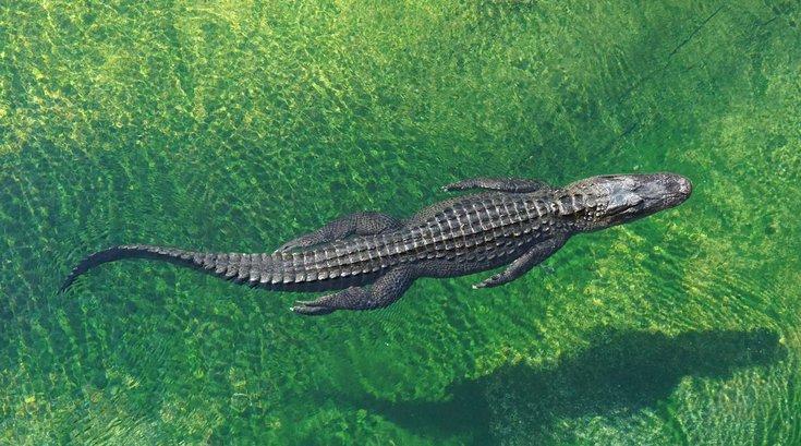 Philly Crocodile Attack Cancun