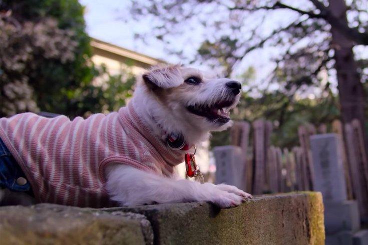 10292018_dogs_doc_Netflix