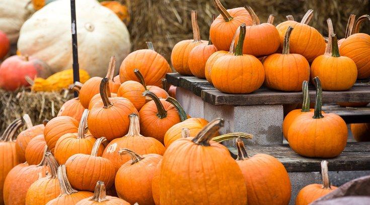 pumpkins recycling