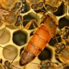 Philadelphia Beekeepers Guild Honey Festival Photo