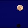 Beaver full moon Philadelphia