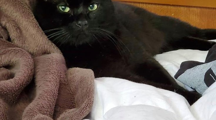 Batman black cat stolen Brookhaven