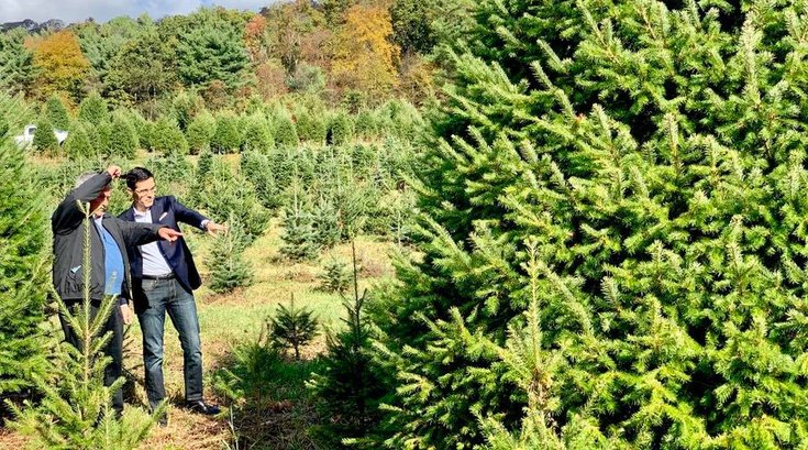 Pennsylvania New Jersey Christmas trees farm