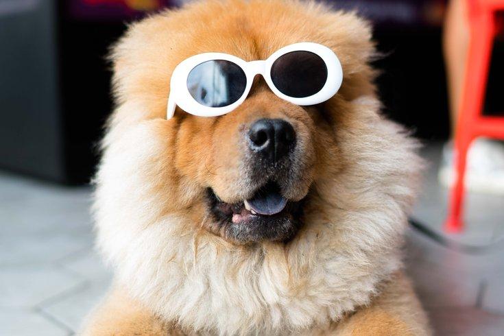 Doggie photo booth at Bok Bar