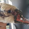 Swan found 'burned' in New Jersey state park