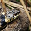 11232018_snake_Flickr.