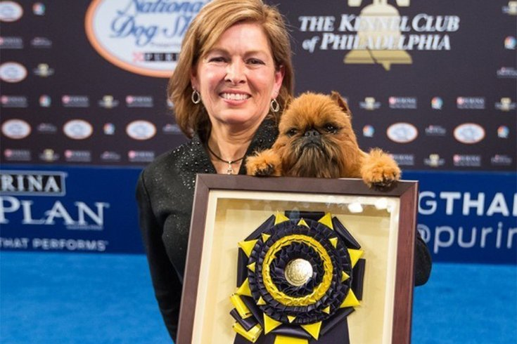 National Dog Show Brussels Griffon >> Brussels Griffon Wins Best In Show At National Dog Show Phillyvoice