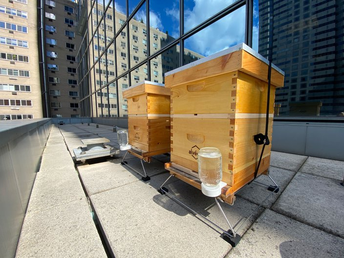 urban beekeeping ibx building