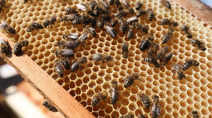 philadelphia urban beekeeping