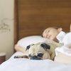 Monmouth County SPCA canine influenza