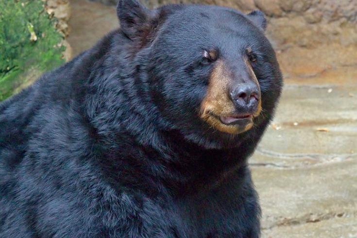 Bear Wilmington Delaware