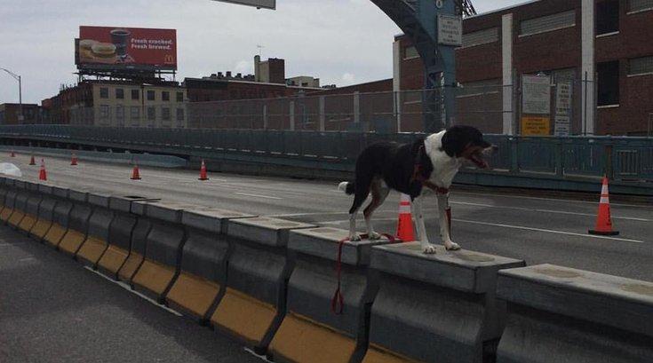 Dog Ben Franklin Bridge