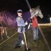 120516_horses_NJ
