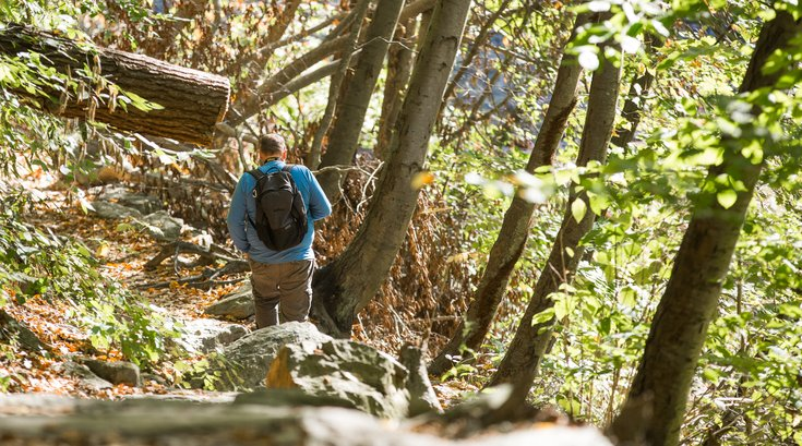 Stock_Carroll - Wissahickon Valley Park Hiking