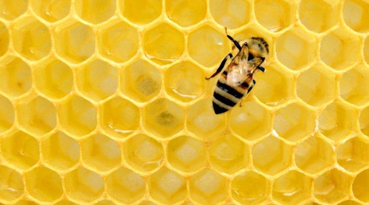 Philadelphia Honey Festival