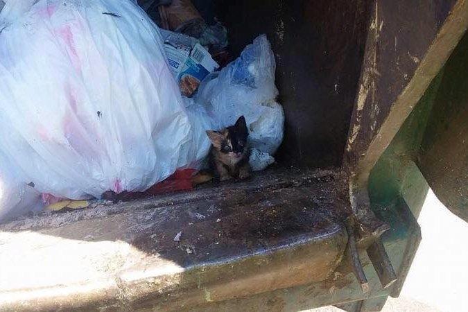 Kitten Saved