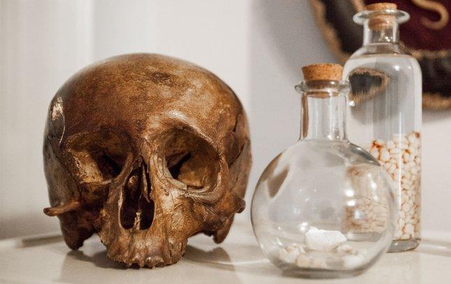 Carroll - Nicole Angemi Human Skull
