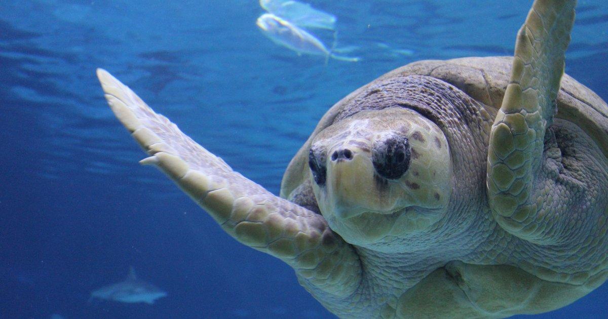 Adventure Aquarium offering buy one, get one deal on admission