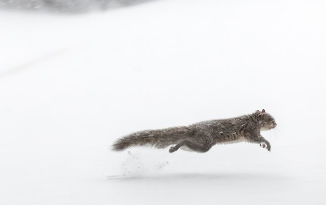 Carroll - Snow Squirrel
