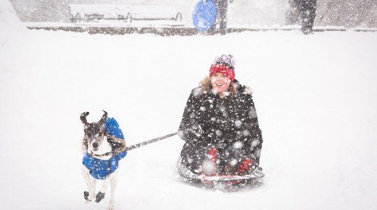 Carroll - Sledding with a dog at Clark Park in West Philadelphia