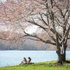 Stock_Carroll - The Schuylkill River on a spring afternoon