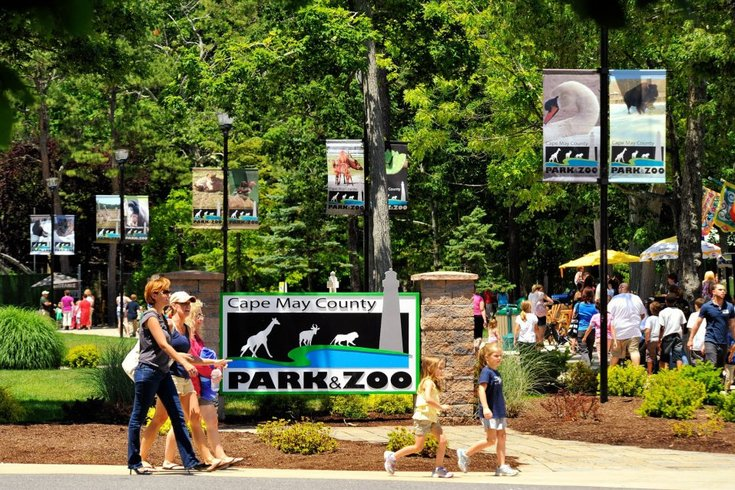 Cape May County Zoo ranked 13th best in the world | PhillyVoice