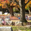 Stock_Carroll - Cemetery in New Jersey