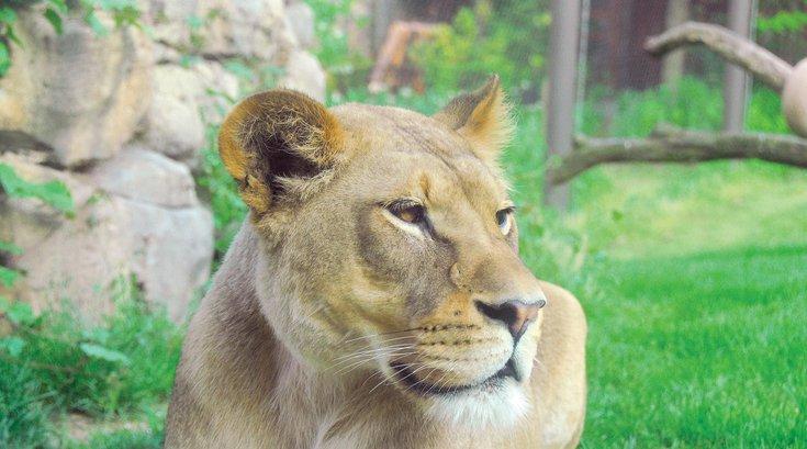 Philadelphia Zoo livestream