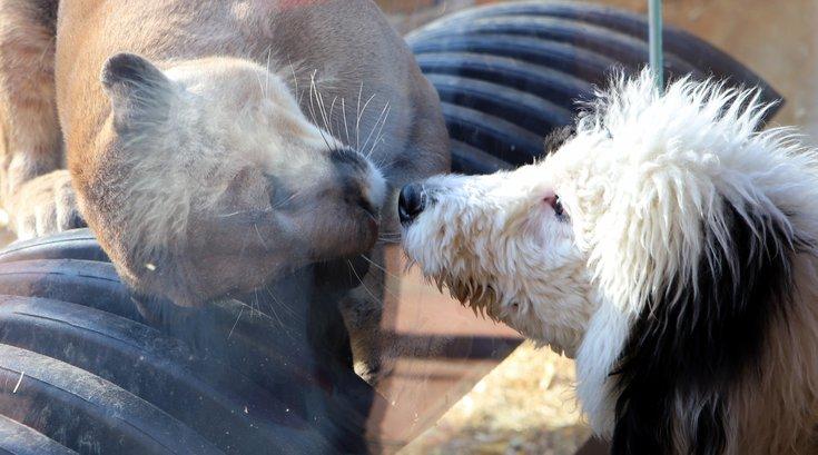 dog-friendly Elmwood Park Zoo