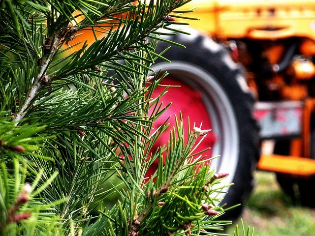 5 local chop-your-own Christmas tree farms | PhillyVoice