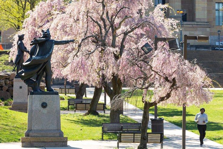 Cherry Blossom 10K/5K